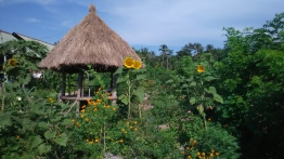 Kebun Setaman Pejeng garden Progress
